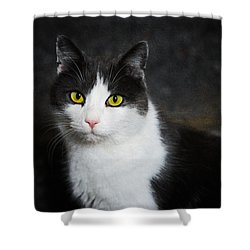 Cat Portrait With Texture Shower Curtain by Matthias Hauser
