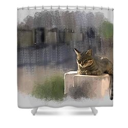 Catnap Shower Curtain by Usha Shantharam