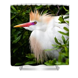 Cattle Egret Shower Curtain by Dawna  Moore Photography