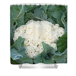 Cauliflower Shower Curtain by Carol Groenen