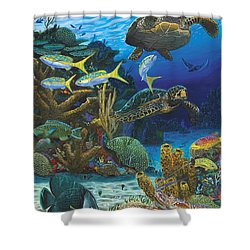 Cayman Turtles Re0010 Shower Curtain by Carey Chen