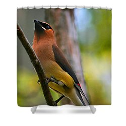 Cedar Wax Wing Shower Curtain by Roger Becker