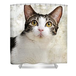Celebrity Shower Curtain by Andee Design