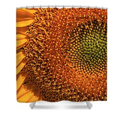 Center Of Attention Shower Curtain by Donna Kennedy