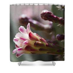 Cereus Hexagonus Pink Shower Curtain by Sharon Mau