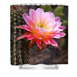 Cereus In Pink Shower Curtain by Ruth Jolly