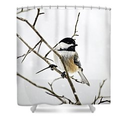Charming Winter Chickadee Shower Curtain by Christina Rollo