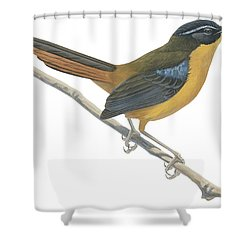 Chat Thrush  Shower Curtain by Anonymous