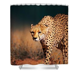 Cheetah Approaching From The Front Shower Curtain by Johan Swanepoel