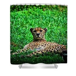 Cheetah Shower Curtain by Karol Livote