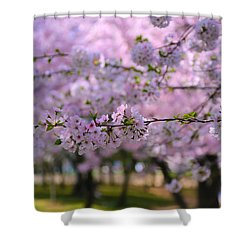 Cherry Blossom Shower Curtain by Mitch Cat