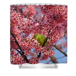 Cherry Blossom Time Shower Curtain by Bill Cannon