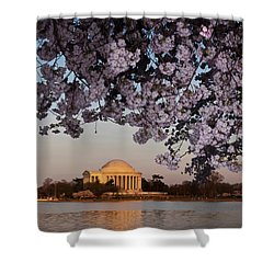 Cherry Blossom Tree With A Memorial Shower Curtain by Panoramic Images