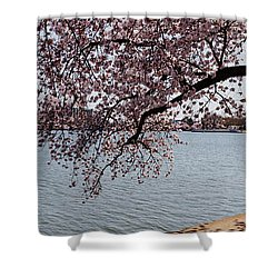 Cherry Blossom Trees With The Jefferson Shower Curtain by Panoramic Images