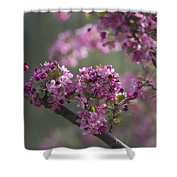 Cherry Blossoms Shower Curtain by Dale Kincaid