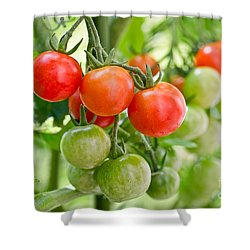 Cherry Tomatoes Shower Curtain by Delphimages Photo Creations