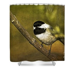 Chickadee Shower Curtain by Cindi Ressler