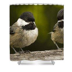 Chickadee Dee Dee Shower Curtain by Jean Noren