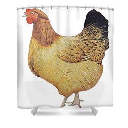 Chicken Shower Curtain by Ele Grafton