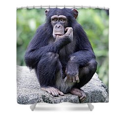 Chimp Sucking His Thumb Shower Curtain by Shoal Hollingsworth