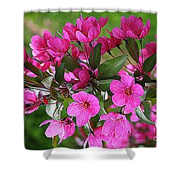 Chinese Apple Blossoms Shower Curtain by Dora Sofia Caputo Photographic Art and Design