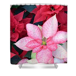 Christmas Pointsettia Shower Curtain by Kathleen Struckle