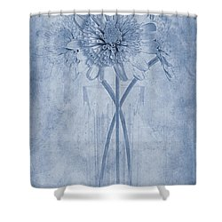 Chrysanthemum Cyanotype Shower Curtain by John Edwards