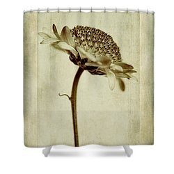 Chrysanthemum In Sepia Shower Curtain by John Edwards