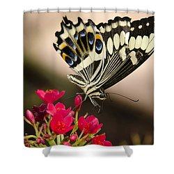 Citrus Swallowtail  Shower Curtain by Saija  Lehtonen