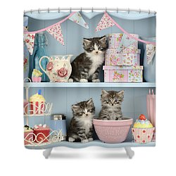 Baking Shelf Kittens Shower Curtain by Greg Cuddiford