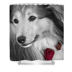 Classy Red Shower Curtain by Loriental Photography