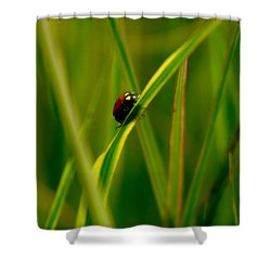 Climbing Up The Long Green Road Shower Curtain by Jeff Swan