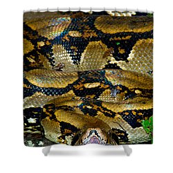 Close-up Of A Boa Constrictor, Arenal Shower Curtain by Panoramic Images
