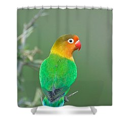 Close-up Of A Fischers Lovebird Shower Curtain by Panoramic Images
