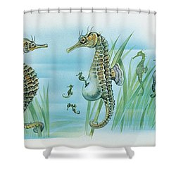 Close-up Of A Male Sea Horse Expelling Young Sea Horses Shower Curtain by English School