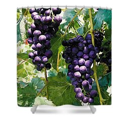 Clusters Of Red Wine Grapes Hanging On The Vine Shower Curtain by Lanjee Chee