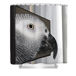 Clyde Oob Shower Curtain by EricaMaxine  Price