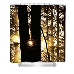 Coastal Forest Shower Curtain by Art Wolfe