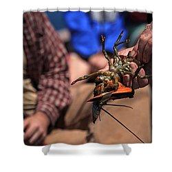 Coastal Maine Is Lobster Shower Curtain by Karol Livote