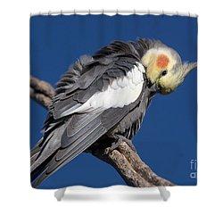 Cockatiel Shower Curtain by Steven Ralser