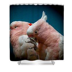 Cockatoos Shower Curtain by Ernie Echols