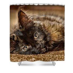 Coco Kitten Shower Curtain by Trever Miller