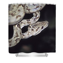 Coiled And Waiting Shower Curtain by James Brunker