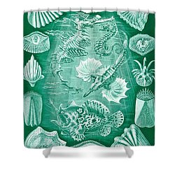 Collection Of Teleostei Shower Curtain by Ernst Haeckel