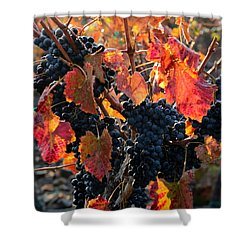 Colorful Autumn Grapes Shower Curtain by Carol Groenen
