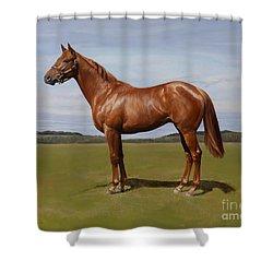 Colt Shower Curtain by Emma Kennaway