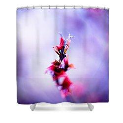 Comatose Shower Curtain by Shane Holsclaw