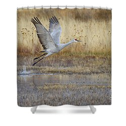 Come Fly With Me Shower Curtain by Ruth Jolly