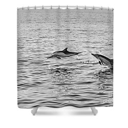 Common Dolphins Leaping. Shower Curtain by Jamie Pham