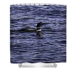 Common Loon 1  Shower Curtain by Thomas Young